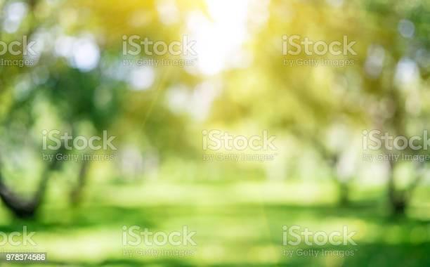 Photo of Park outdoor landscape