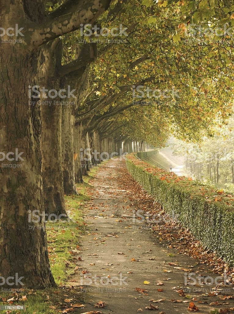 Park perspective royalty-free stock photo