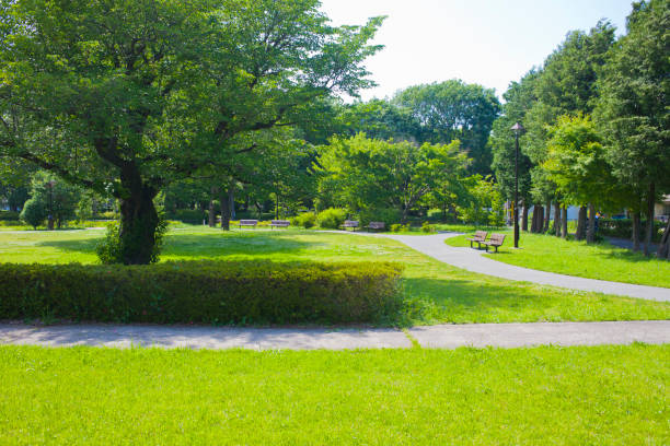 park Sunny garden satoyama scenery stock pictures, royalty-free photos & images