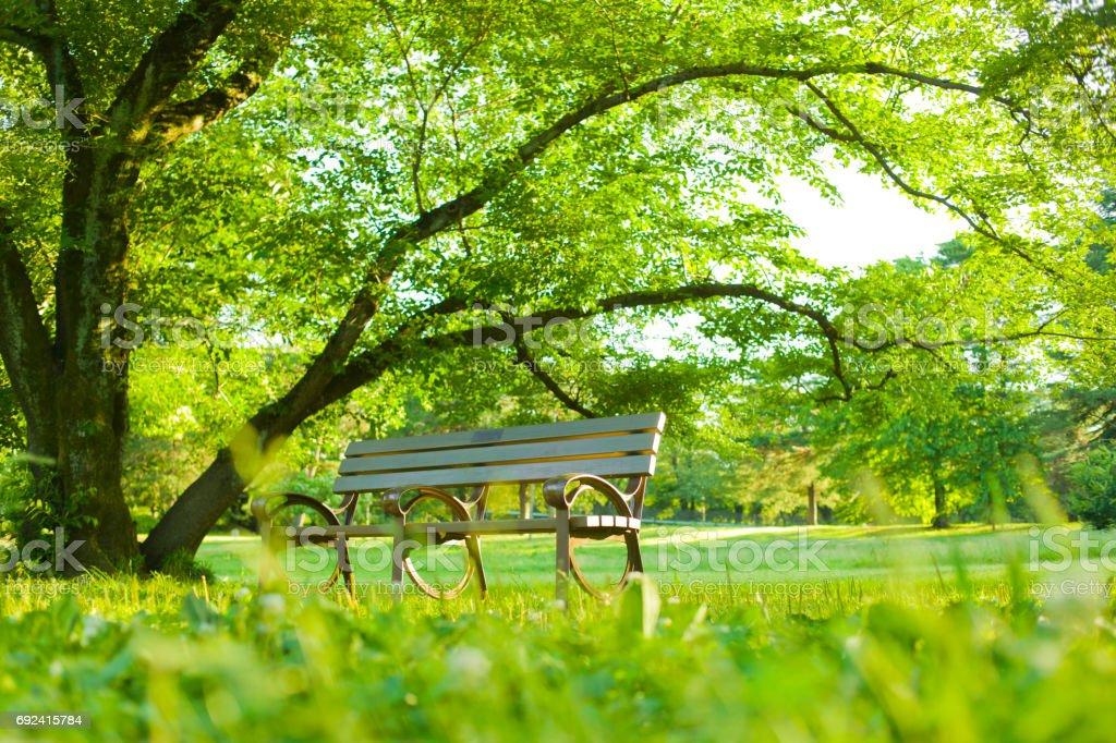Park - Photo