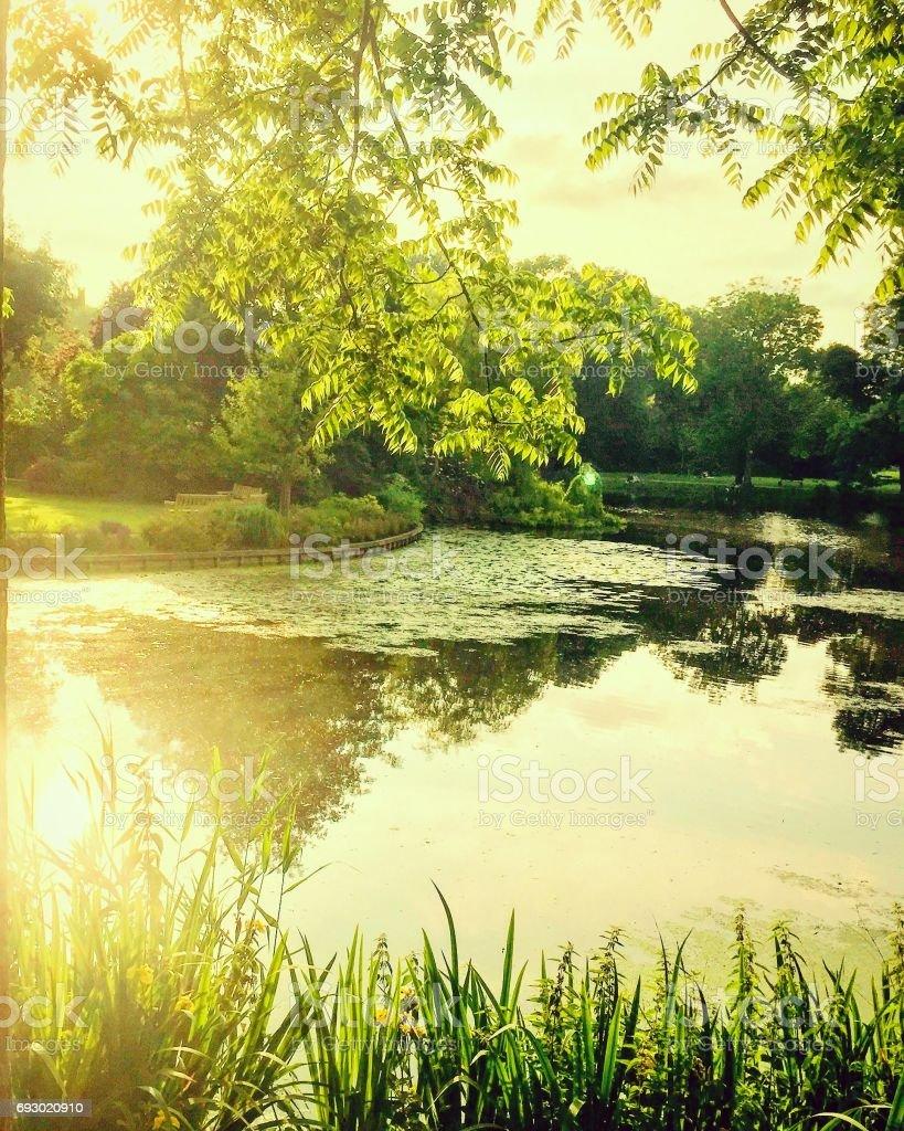 Park pond scene stock photo