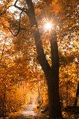 sun shining through trees and autumn scenery,