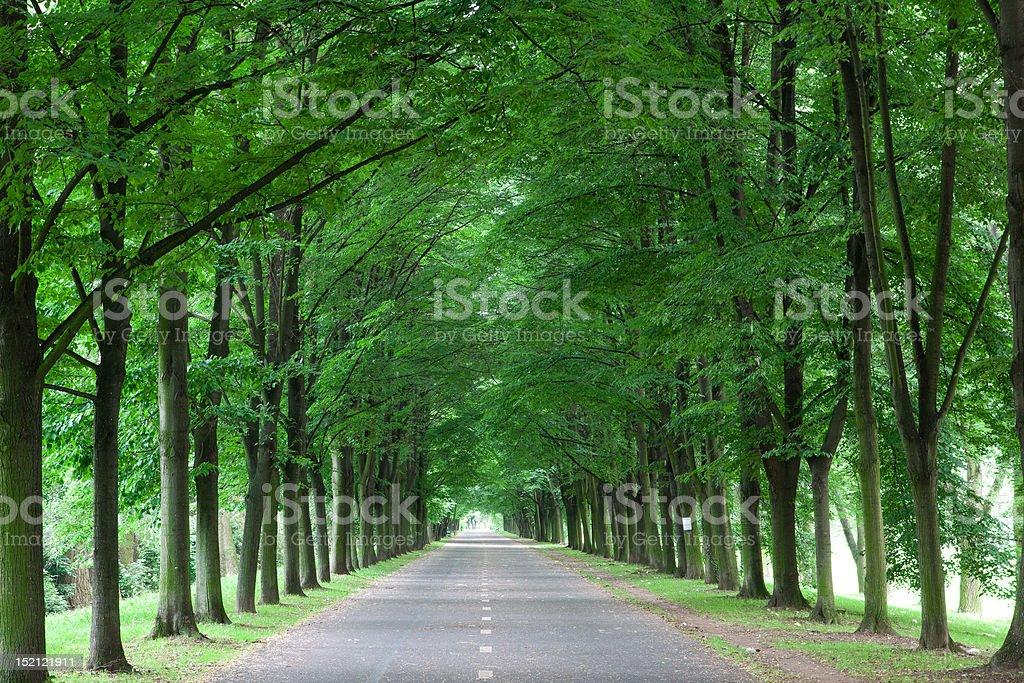 Park road royalty-free stock photo