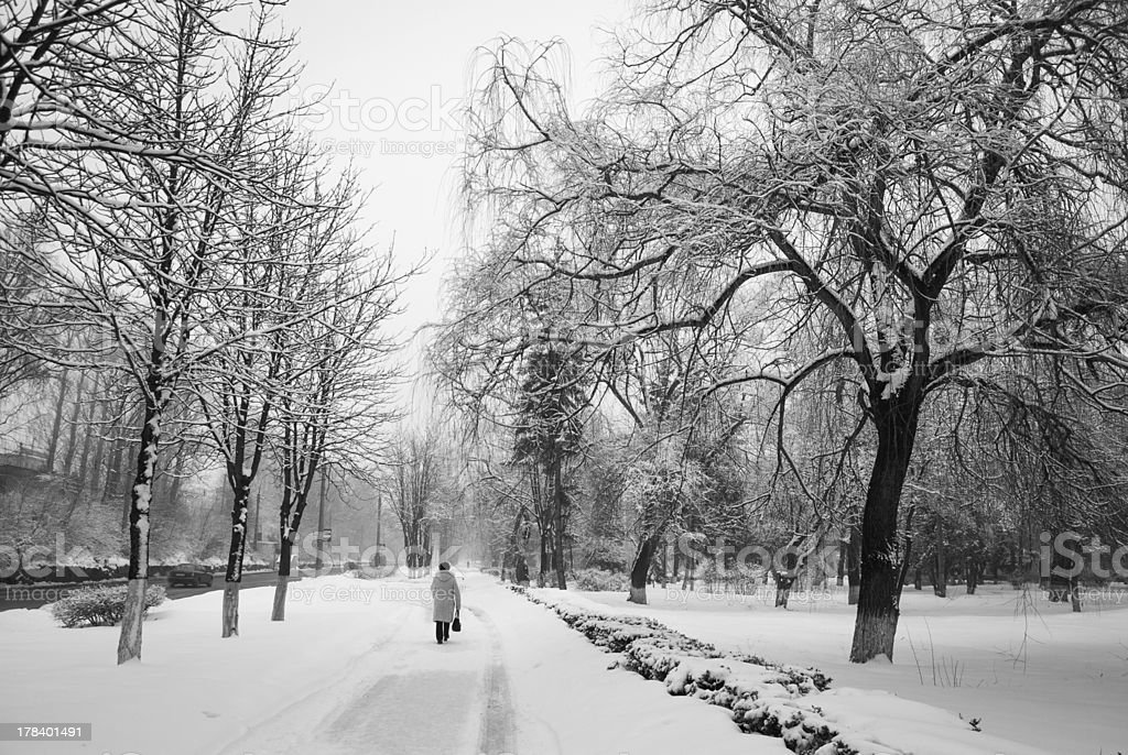 park. Snowtree in Winter royalty-free stock photo