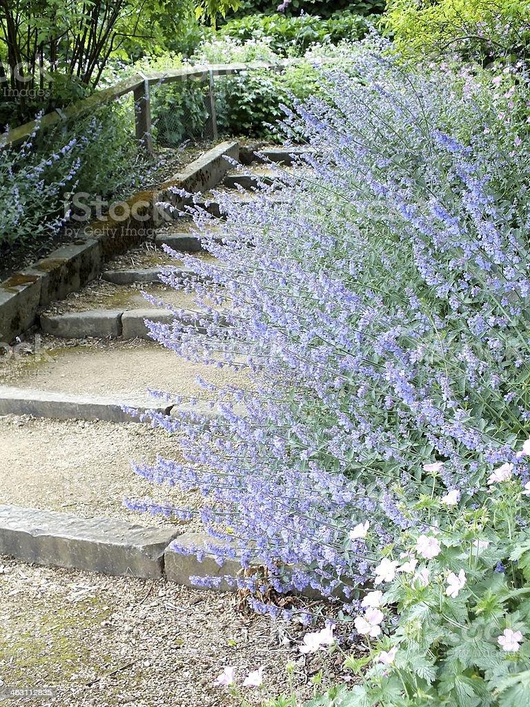 Park  Steps royalty-free stock photo