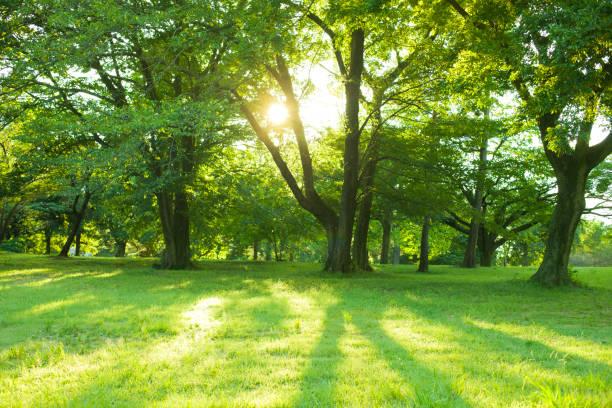 Park sunlight picture id849659692?b=1&k=6&m=849659692&s=612x612&w=0&h=vuhibgoszcvyttpyzmui5wwo7 dp ik1t4 6xw 3fn0=