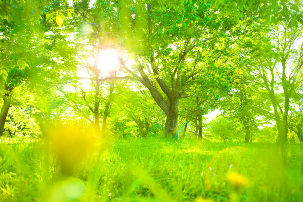 park sunlight - satoyama scenery stock photos and pictures