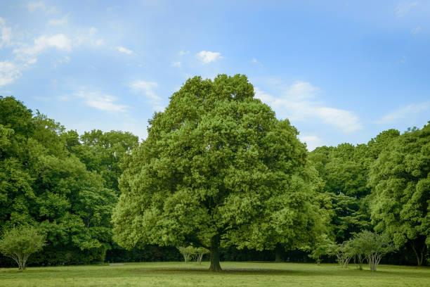 park trees and blue sky - 介護 zdjęcia i obrazy z banku zdjęć