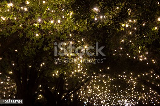 Park trees covered with bulb string lights. Night shot.