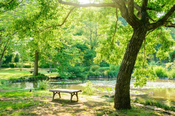 park with a pond - 介護 zdjęcia i obrazy z banku zdjęć