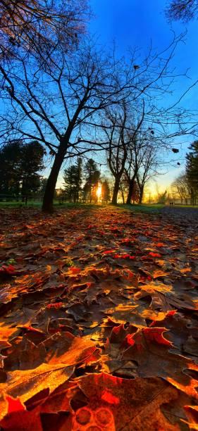 Park mit Herbstfarben – Foto