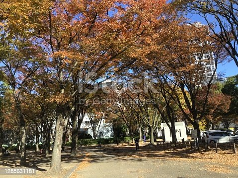istock Park with beautiful autumn leaves 1285631181