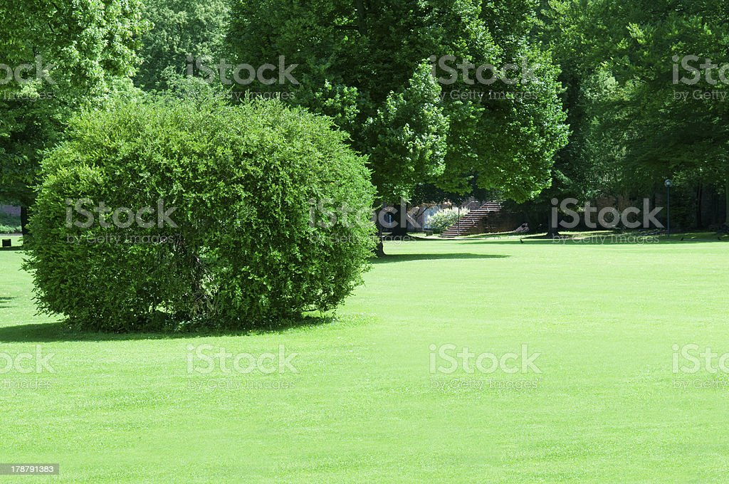 park with beautiful green lawns royalty-free stock photo