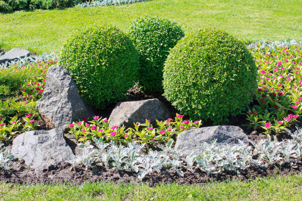 Park with bushes and stones. Landscape design stock photo
