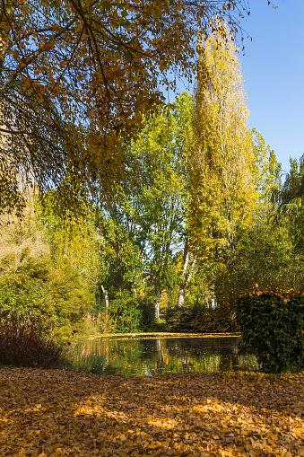 Park with Lake in Autumn - Parque con Lago Otoño