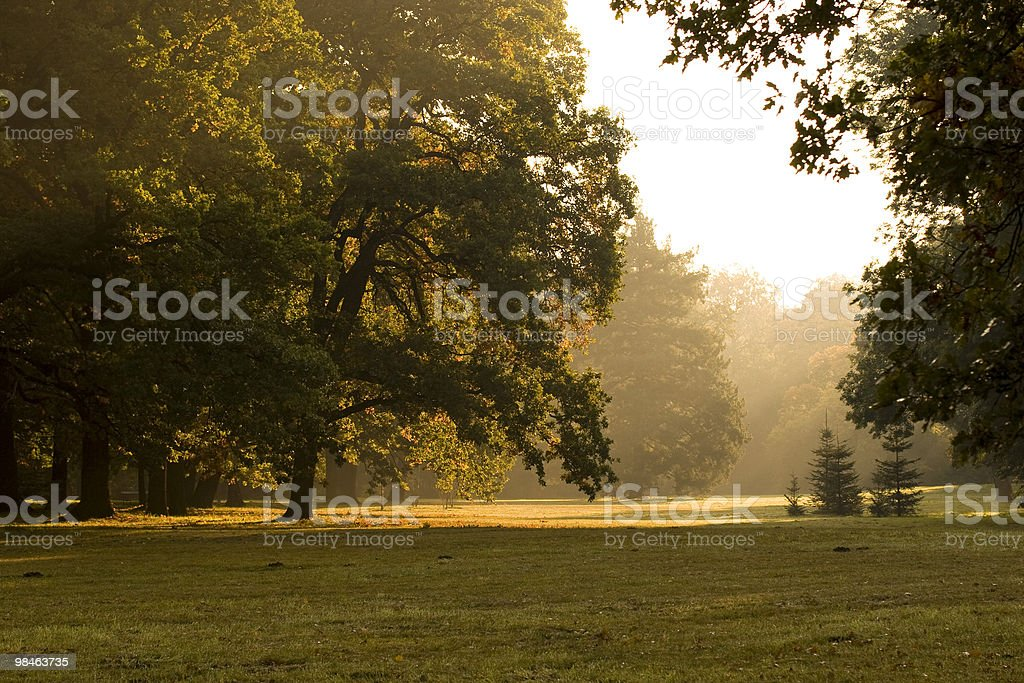 Park with morning light royalty-free stock photo