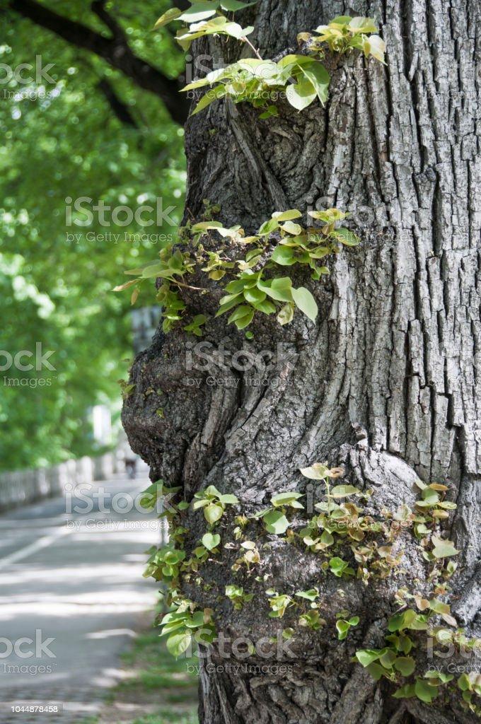 Park mit alten Baumstämmen im Frühling – Foto