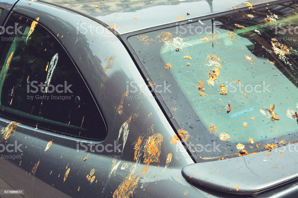 Parked car covered with guano stock photo