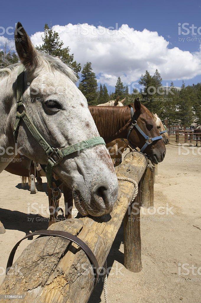 parked horses stock photo