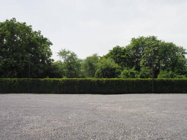 parkeerplaats bespimpeld met grind bush boom natuur achtergrond - grind stockfoto's en -beelden