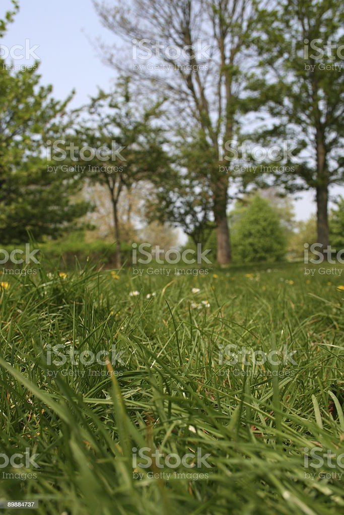 Parkland royalty-free stock photo
