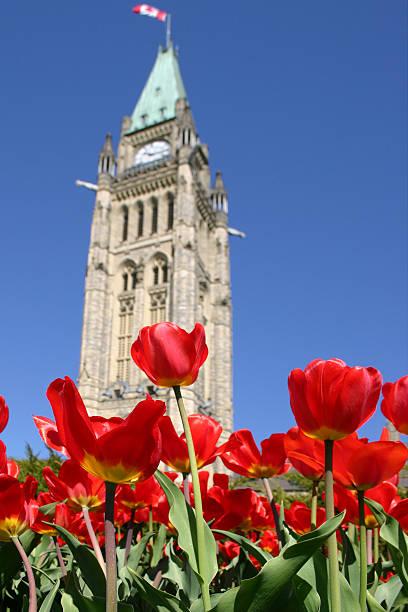 Parlament Tulpen - 01 – Foto
