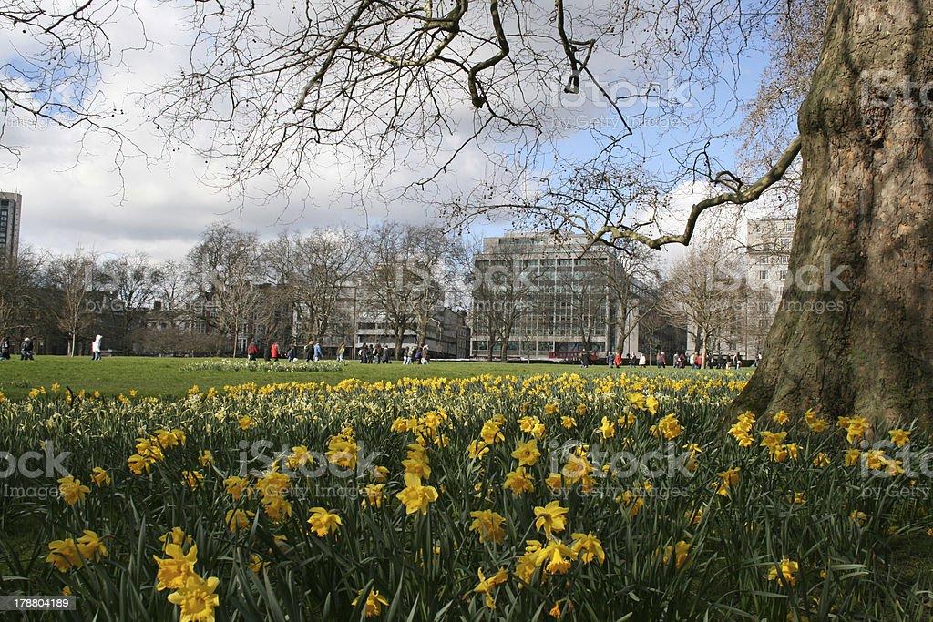 Parque público royalty-free stock photo