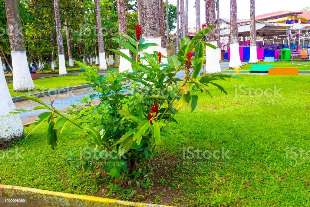 Parque Vargas City Park In Puerto Limon Costa Rica Stock Photo Download Image Now Istock