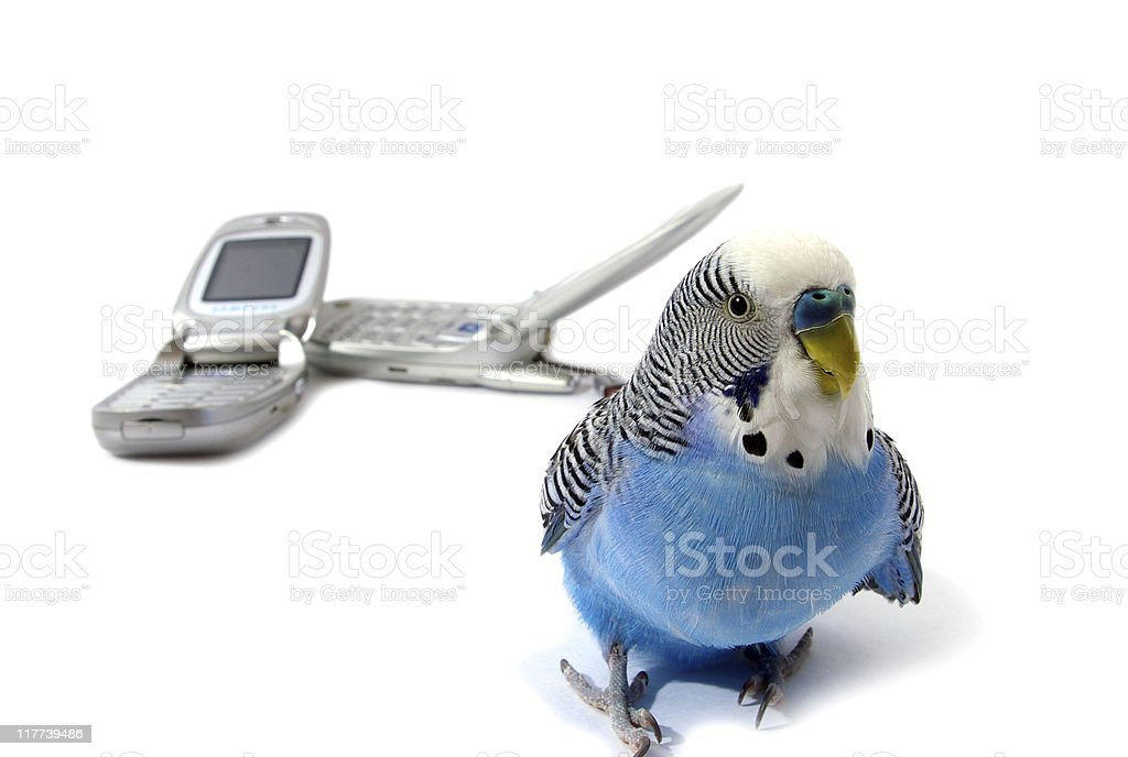parrot and telephones royalty-free stock photo