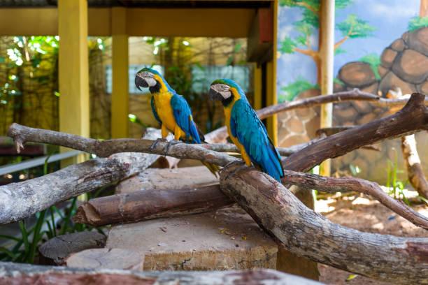 Parrot at Langkawi Wildlife Park stock photo