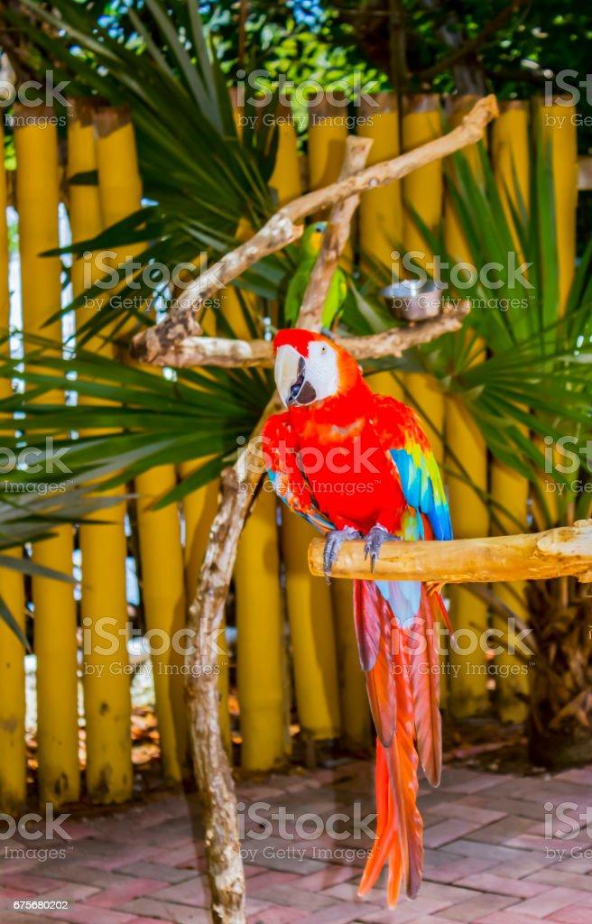 Parrot bird royalty-free stock photo