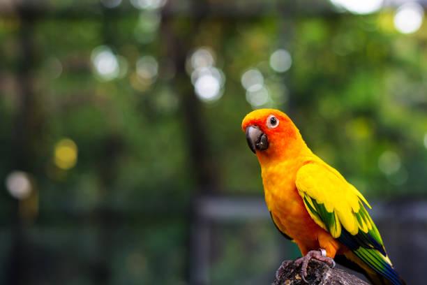 stand d'oiseau de perroquet sur le tronc et regardant - animaux familiers exotiques photos et images de collection