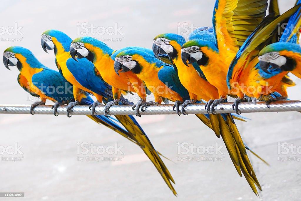 Parrot birds stock photo