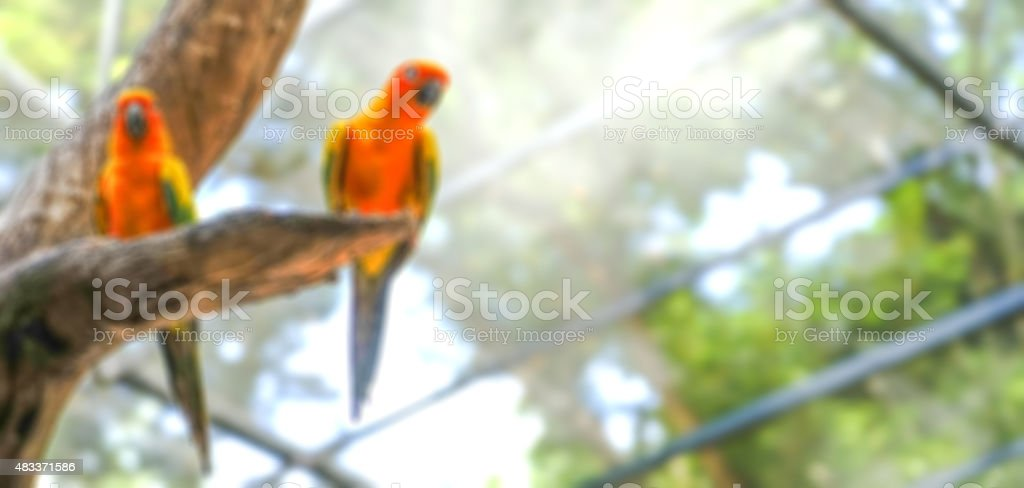 Parrot blurred background stock photo