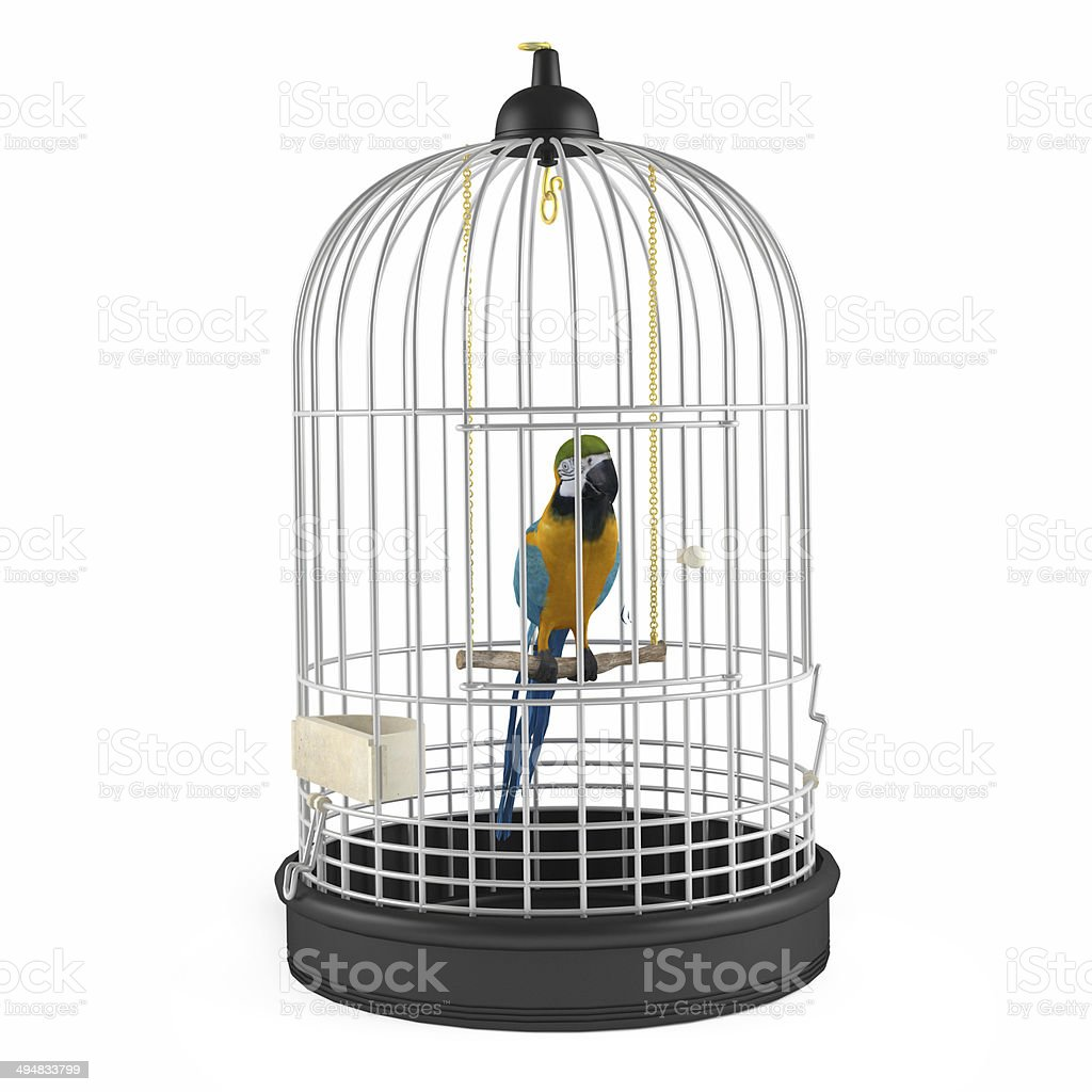 Parrot Cage isolated stock photo