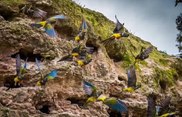 papagei-kolonie - urbanara stock-fotos und bilder