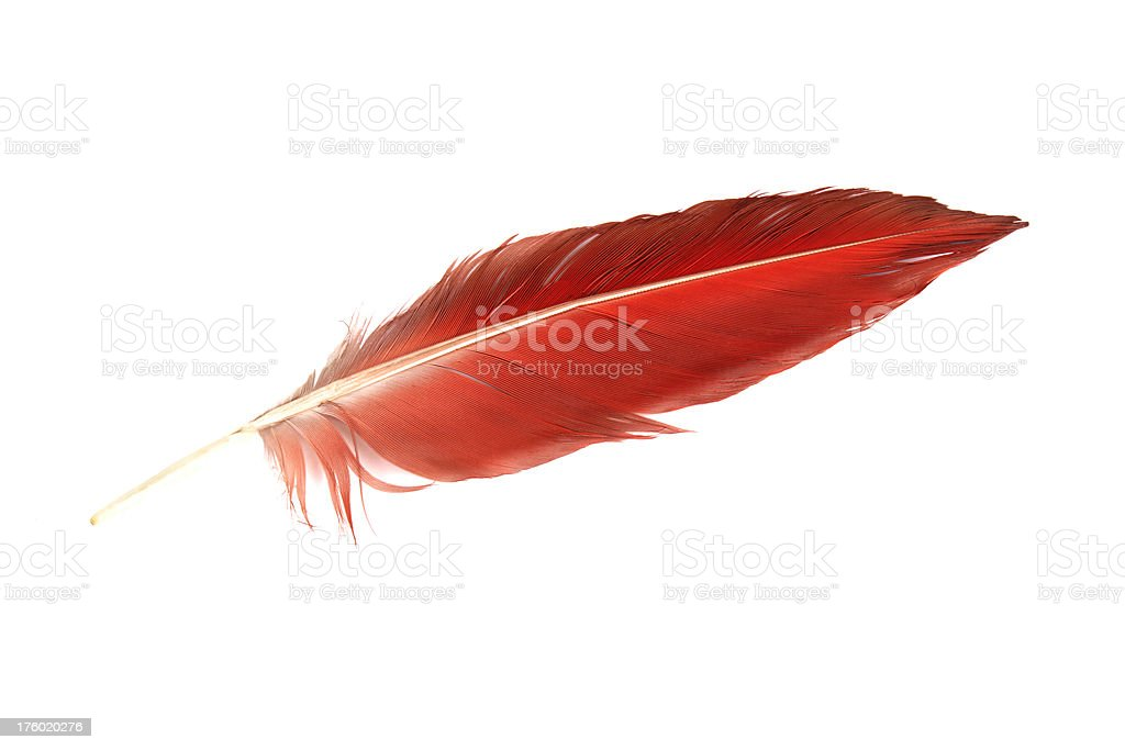 Parrot feather. royalty-free stock photo
