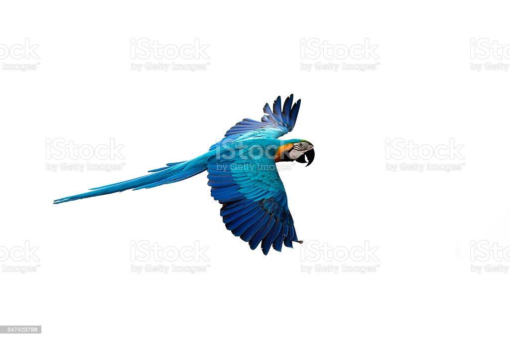 Papagei Fliegen – Foto