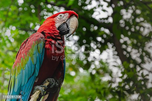 1153034372istockphoto parrot in the foreground on the banks of the guayas river.Guayaquil, Ecuador 1152281206