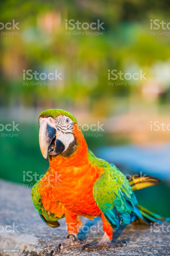 Parrot, lovely bird, animal and pet at the natural park stock photo