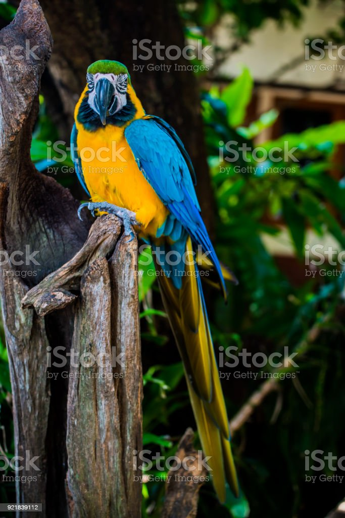 Parrot, lovely bird, animal and pet in the garden stock photo