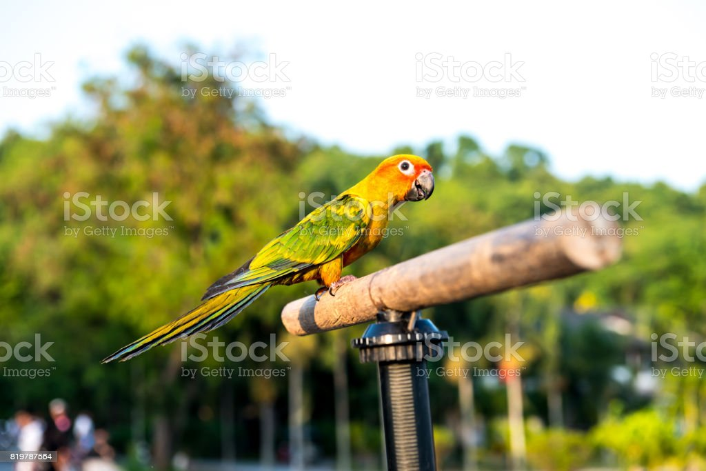 Parrot, lovely bird, animal and pet stock photo