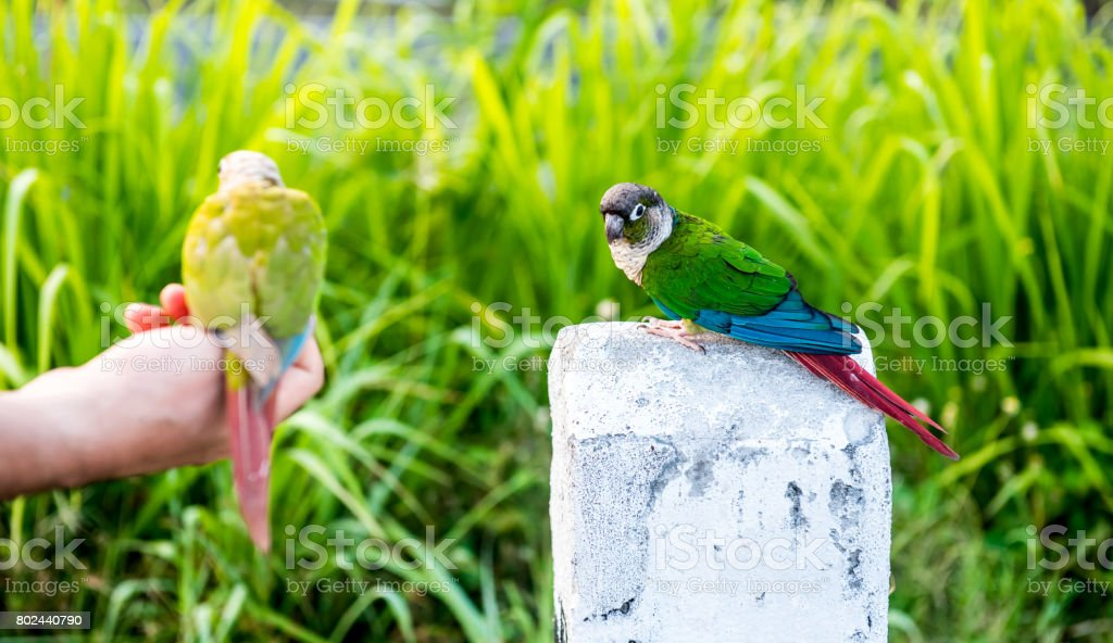 Parrot, lovely bird, freedom animal and pet stock photo