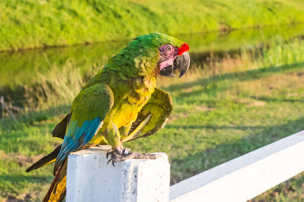 Parrot macaw stock photo