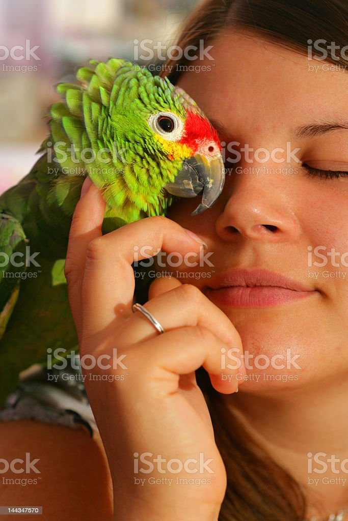 Parrot Passion royalty-free stock photo