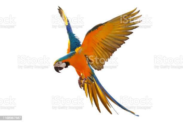 Parrot picture id1168967587?b=1&k=6&m=1168967587&s=612x612&h=wjdyvgwhwaebg5pniyj7ddshswspd8hdsrmqg7zj61g=