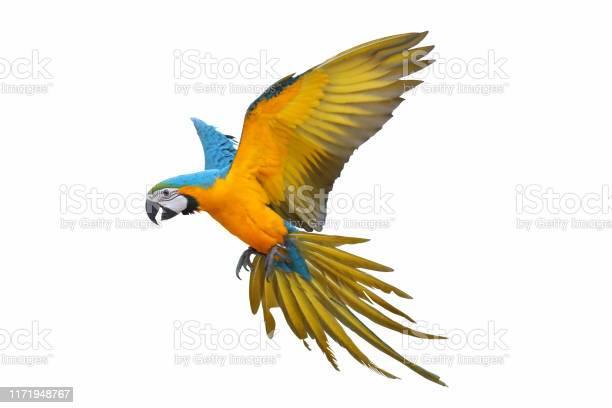 Parrot picture id1171948767?b=1&k=6&m=1171948767&s=612x612&h=ehrfnoab50tjaf4knbfeyv5s60squsxa7jg9nt44hde=