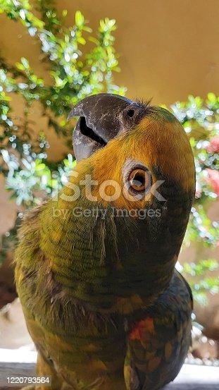 An eye parrot at camera