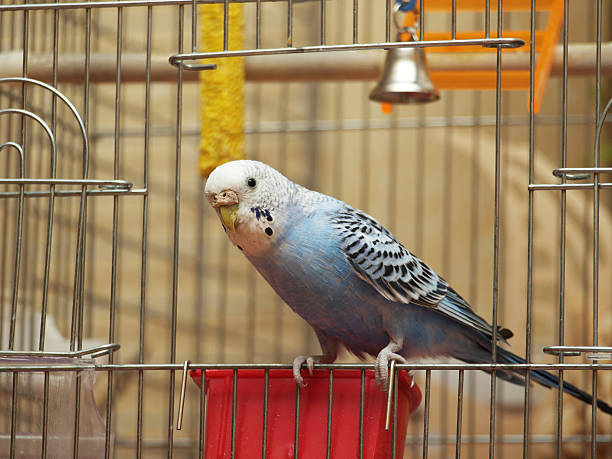 Parrot Parrot caenorhabditis elegans stock pictures, royalty-free photos & images