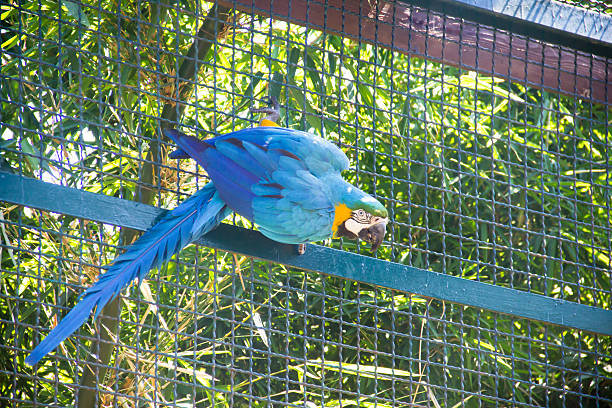 parrot - cage animal nuit photos et images de collection